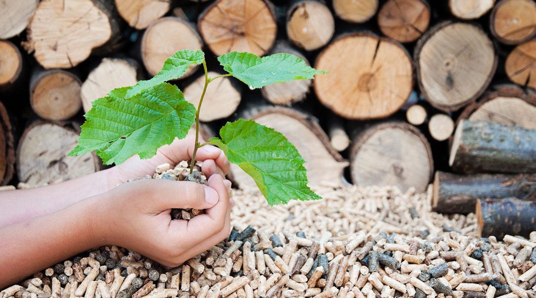 biomasse-3-innovare-bio-energia-progetto-energie-rinnovabili-green-energy